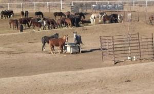 CCI horses
