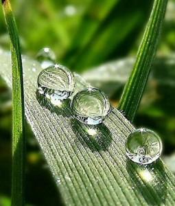 water drops on crop